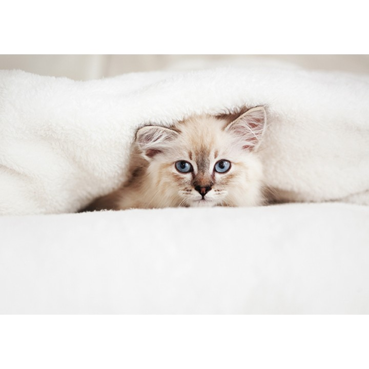 Kitty in bed