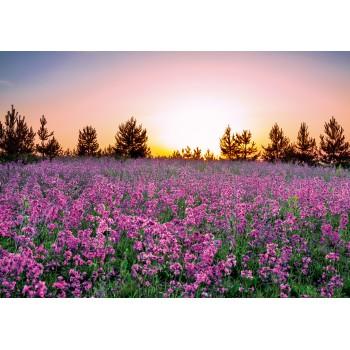Lilac pleasure