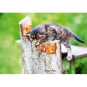 Kitten on a stump