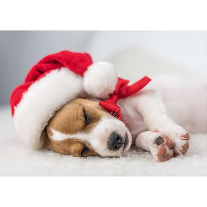 The Santa Dog