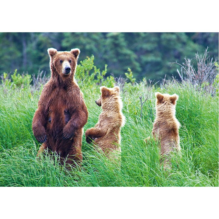 Family of bears