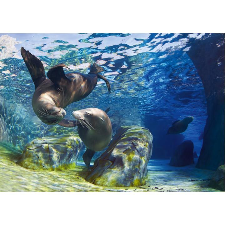Seals under water