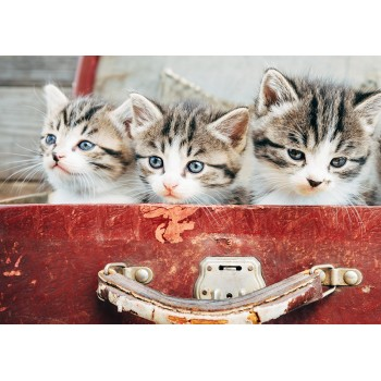 Kittens in a suitcase