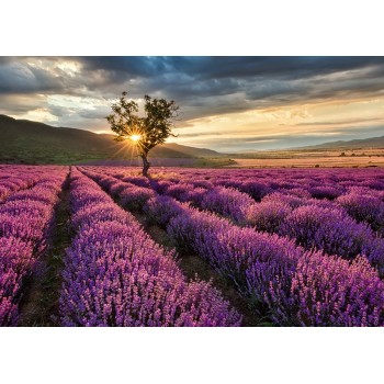 Endless lavender field