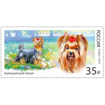 Decorative dog breeds. Yorkshire terrier