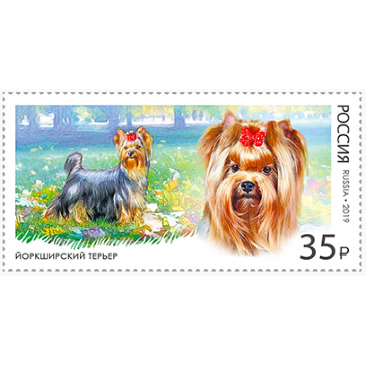 Decorative dog breeds. Yorkshire terrier