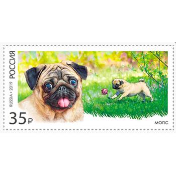Decorative dog breeds. Pug