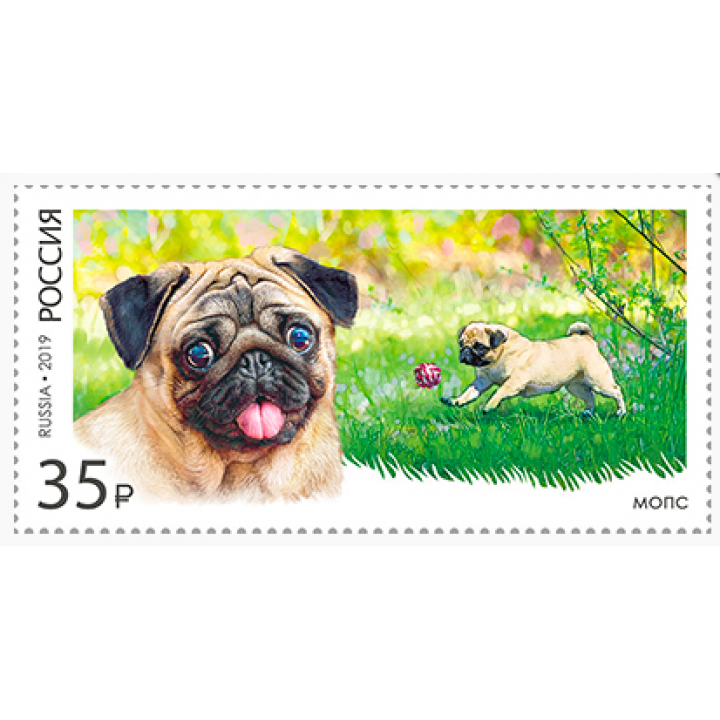 Decorative dog breeds. Pug