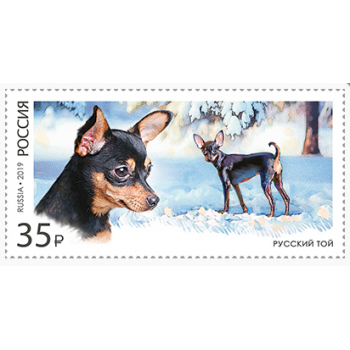 Decorative dog breeds. Russian toy terrier