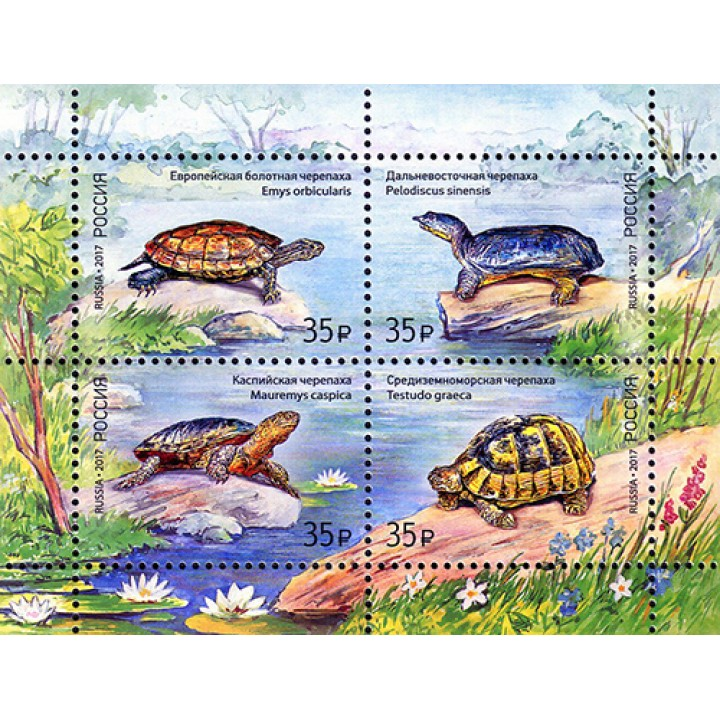 Fauna of Russia. Turtles