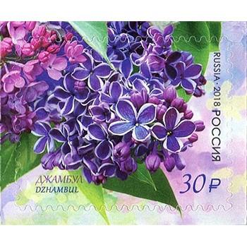 Flora of Russia. Lilac Dzhambul