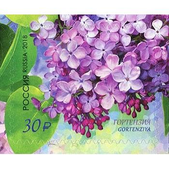 Flora of Russia. Lilac Gortenziya