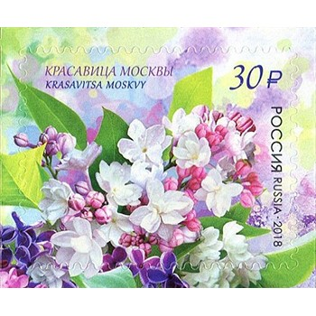 Flora of Russia. Lilac Beauty of Moscow