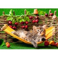 Kitten in a hammock