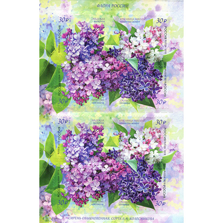 Flora of Russia. Lilac
