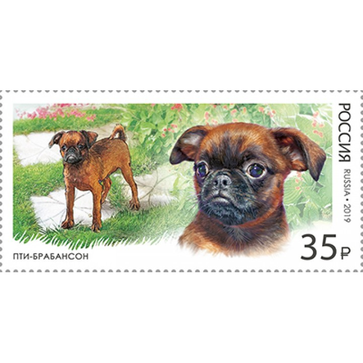 Decorative dog breeds. Petit Brabancon