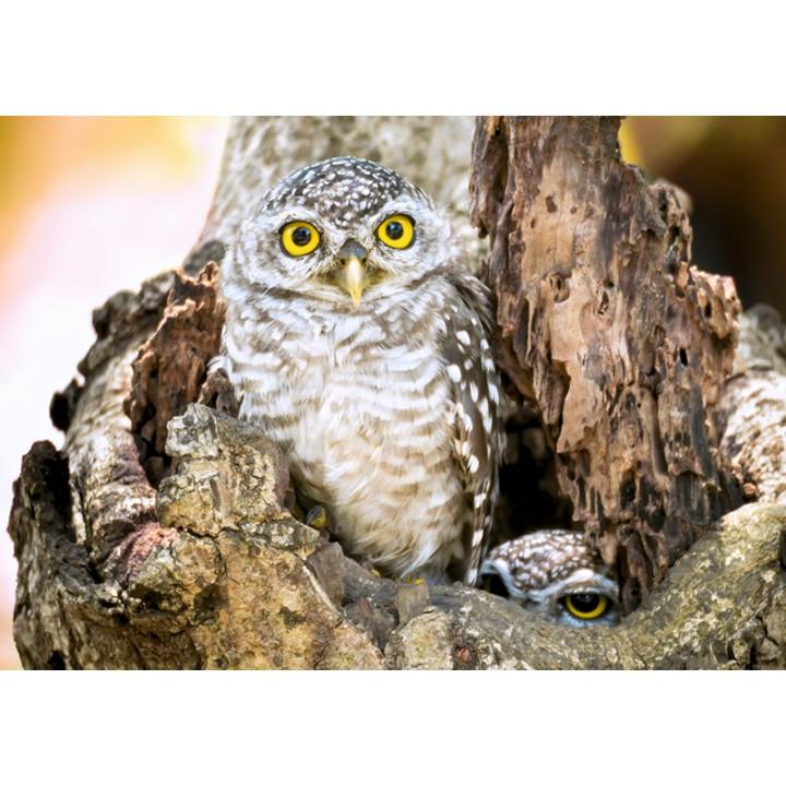 Owlets