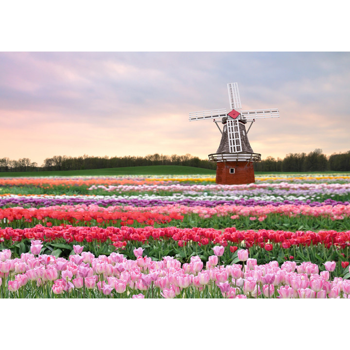 Mill and tulips
