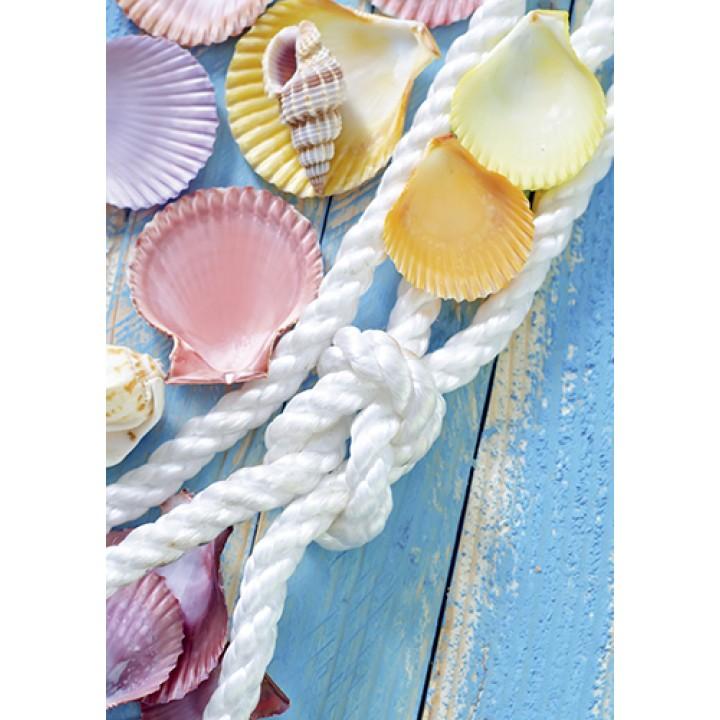 Colored seashells