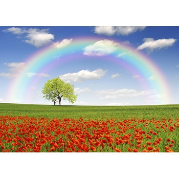 Rainbow over the poppy field