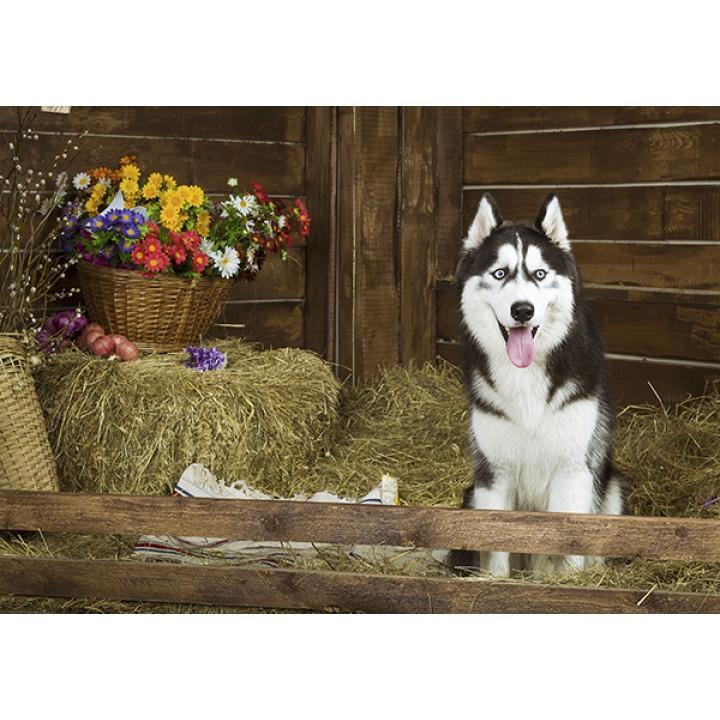 Husky and flowers
