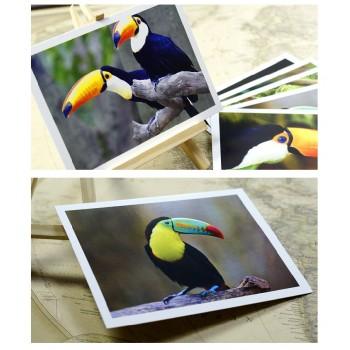 Toucans (6 postcards, 14*10 cm)
