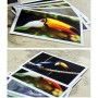Toucans (6 postcards, 14*10 cm)