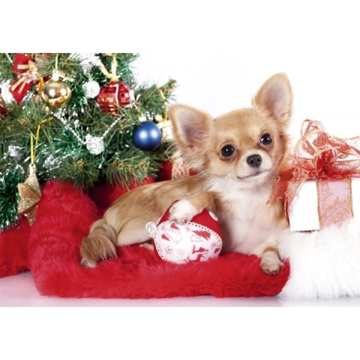 Dog and gifts